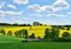 Wybór środków ochrony z rynku herbicydów
